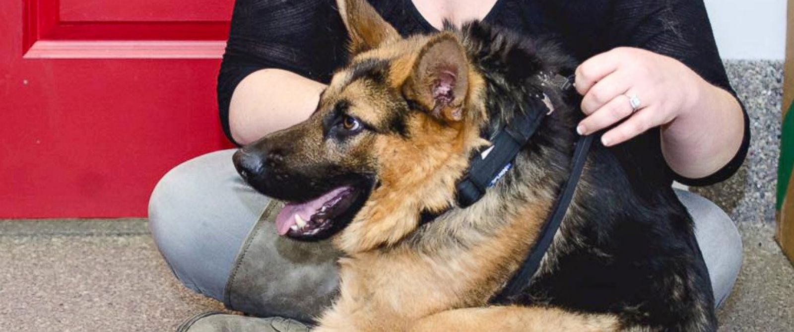 PHOTO: Quasimodo, an estimated 4-year-old German shepherd, has a condition called short spine syndrome.