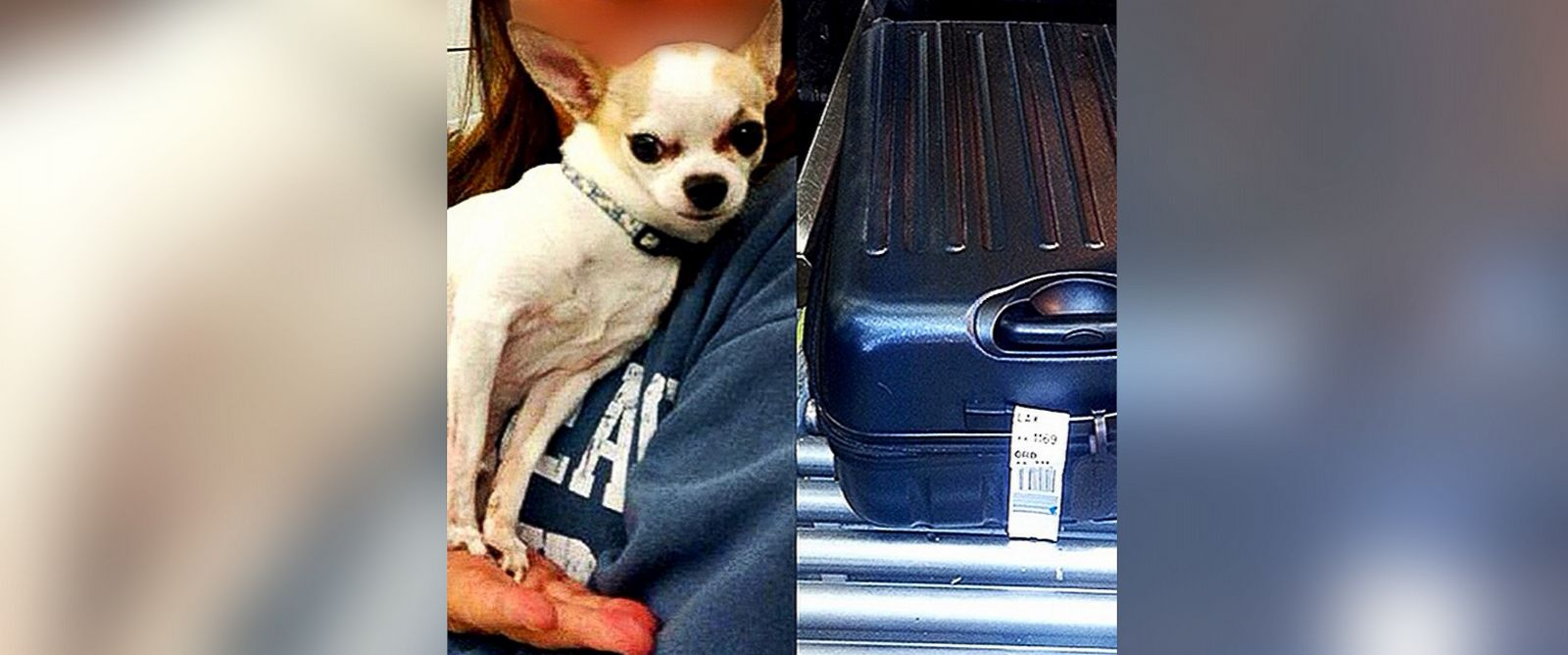 PHOTO: The TSA found a dog inside a suitcase at LaGuardia Airport this week.