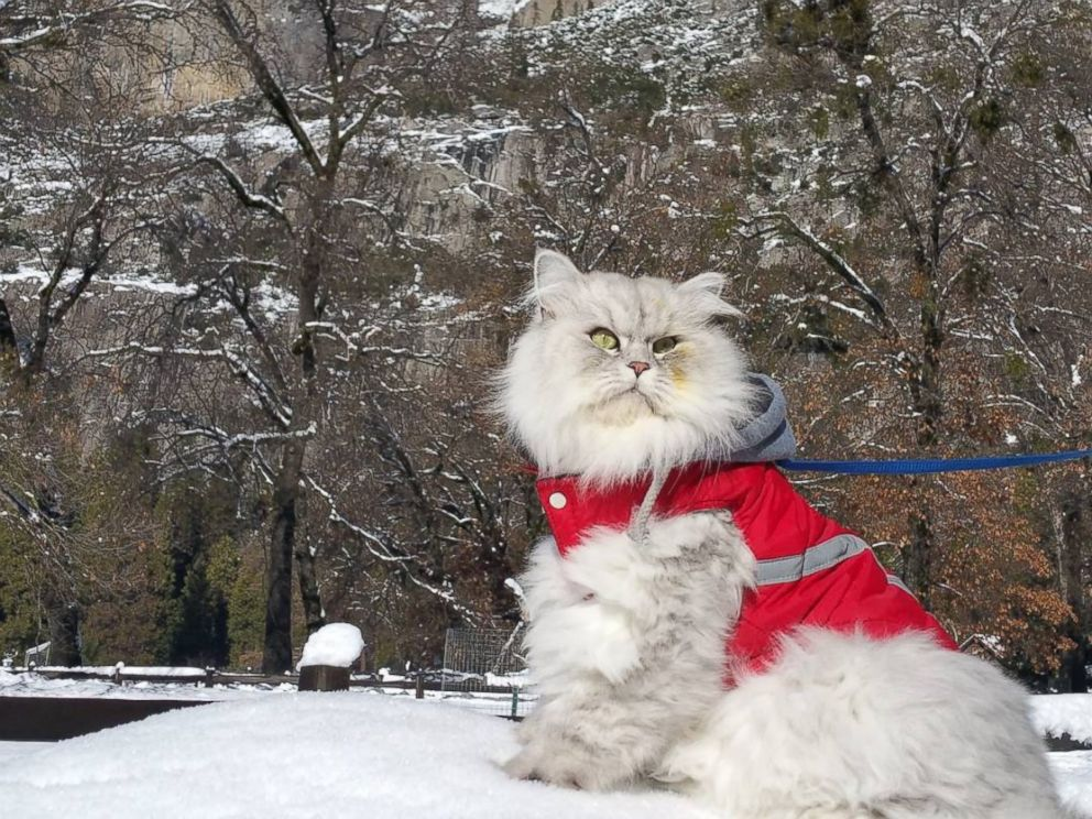 Gandalf the Traveling Cat