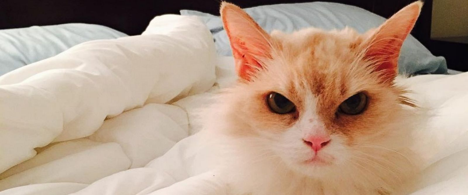 PHOTO: Fierce Feline Named Angry Pearl Goes From Shelter to Viral Stardom