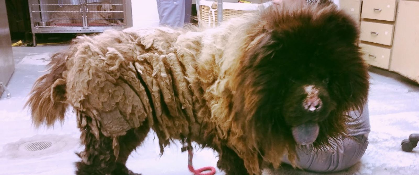 PHOTO: Harry was found with over five pounds of matted fur.