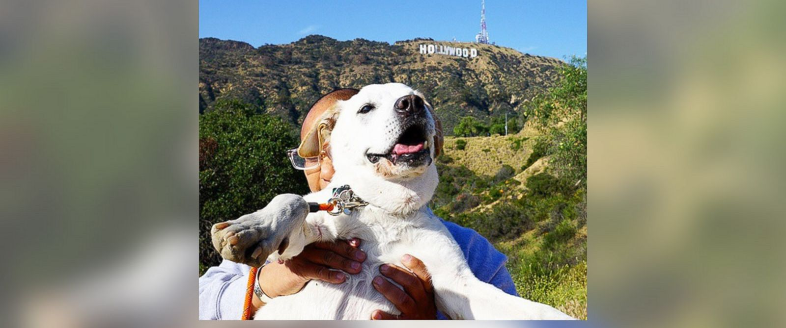 PHOTO: Poh the dog visited 35 cities and rode 12,000 miles.