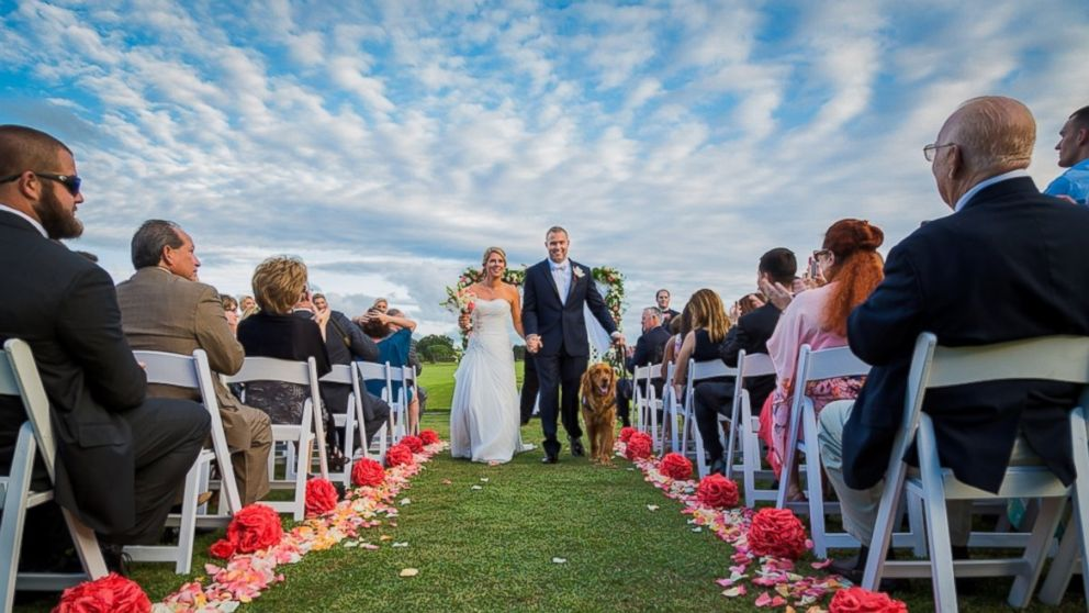 Ht therapy dog wedding 03 mm 151005 16x9 992