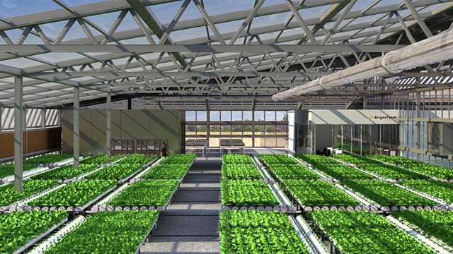 PHOTO: BrightFarms greenhouse