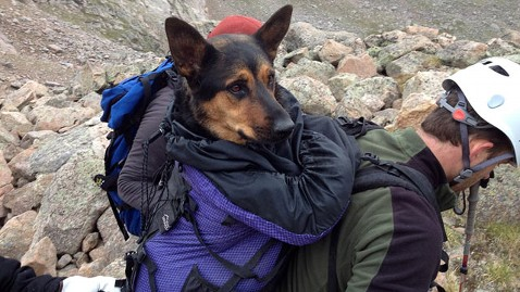 ht missy dog rescue tk 120816 wblog Injured Dog Rescued From Mountain; Owner Who Left It There Wants It Back