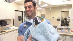 This Veterinarian is Instagrams Dr. McDreamy of Pets