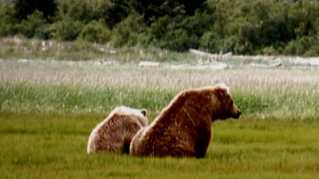 VIDEO: Deadly grizzly attacks and why there may be a new wave of Bad News Bears.