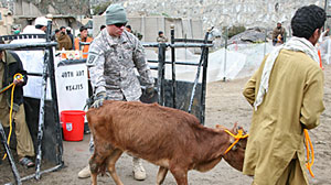 Photo: U.S. Troops Provide Vet Services in Afghanistan: Goats, Cows, Sheep -- and One Monkey -- Among Hundreds of Animals Treated for Free