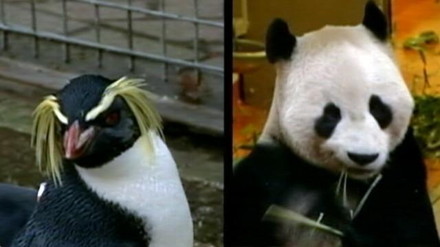 Angry Birds at Edinburgh Zoo?
