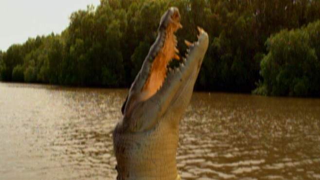National Geographic: King Croc