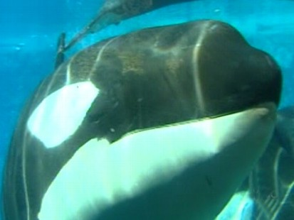 Sea World Cited in Trainers Death