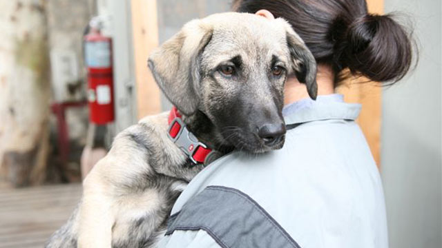 PHOTO:Athena, a stray dog, was found on a base in Kunar province in Afghanistan and adopted by U.S. soldiers.