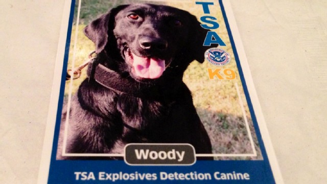TSA puts dog trained to sniff out explosive material to the test.