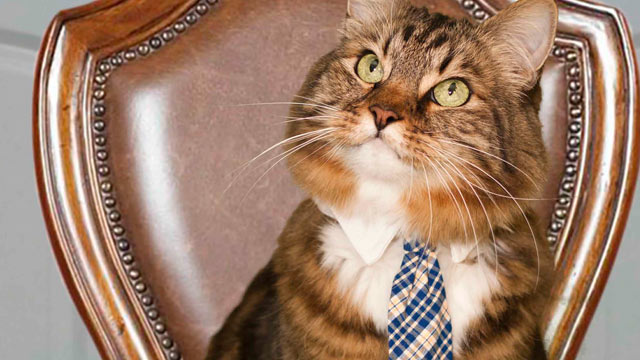 PHOTO: A new U.S. Senate candidate, Hank the cat, in Virginia wears a tie, has a campaign website and even launched an ad.