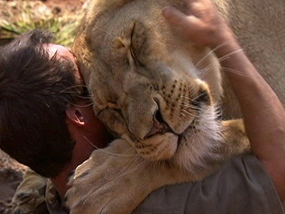 VIDEO: Lion Smothers Man with Kisses