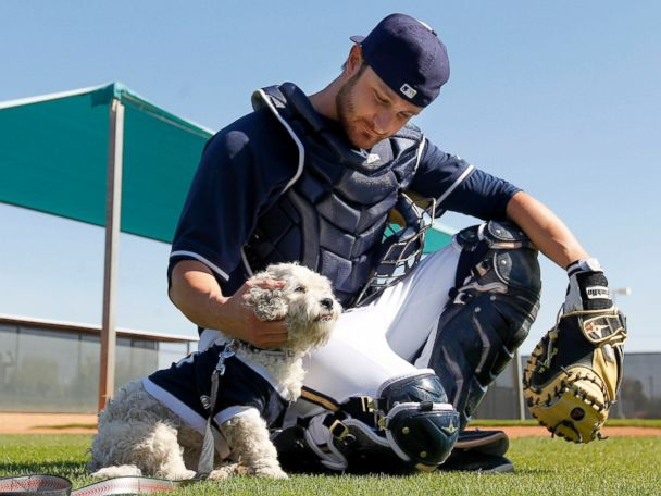 AP hank catcher 140226 4x3 608 The Most Adorable Thing in Baseball Is a Stray Dog Named Hank