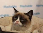 PHOTO: Grumpy Cat, the famous internet feline, made an appearance at SXSW.