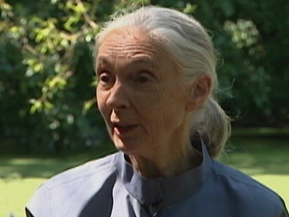 VIDEO: Jane Goodalls discoveries