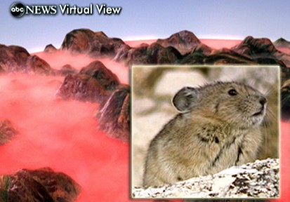 VIDEO: The Pika faces extinction in North America due to global warming