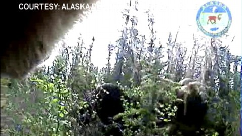 abc bear cam 120114 wblog Take a Bears Eye View of the World
