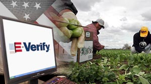 Photo: Illegal Immigration: Can a Computer Database Help? E-Verify, System for Screening Illegal Workers, Gets White House Boost