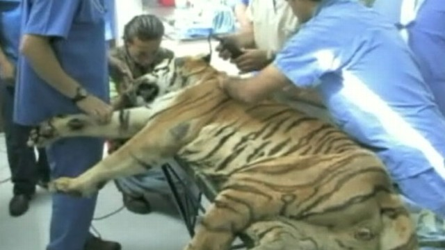 VIDEO: Stem cell research is being used to treat health problems in animals.