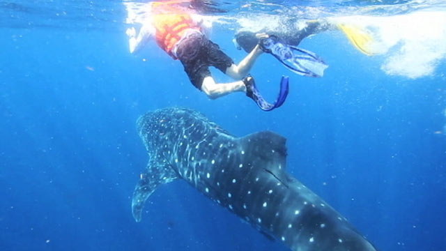 PHOTO:Valerie Gaynor, a high school marine biology teacher, swims with sharks and films her encounters to spark her students interest in the classroom.