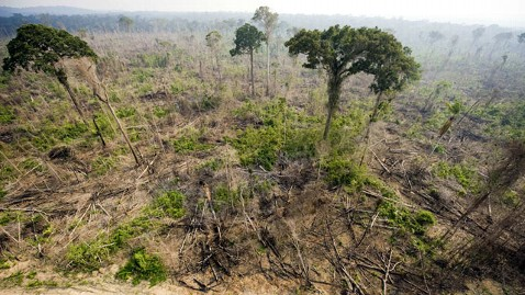 gty brazil deforestation nt 111206 wblog 9 Bits and Scenes at a Global Huddle on a Grave Crisis