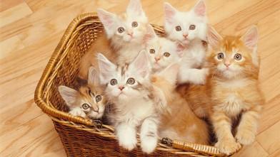 PHOTO: Kitten stories on Buzzfeed often go viral.