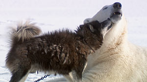 PHOTO: Unlikely Animal Friends Explores Unusual Animal Bonds: National Geographic Program Features Animal Odd Couples