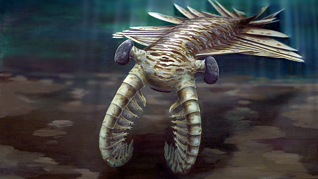 PHOTO: Illustration of super predator Anomalocaris