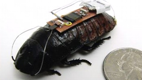 ht cockroach cyborg ll 120913 wblog Earthquake First Responders: Cockroaches