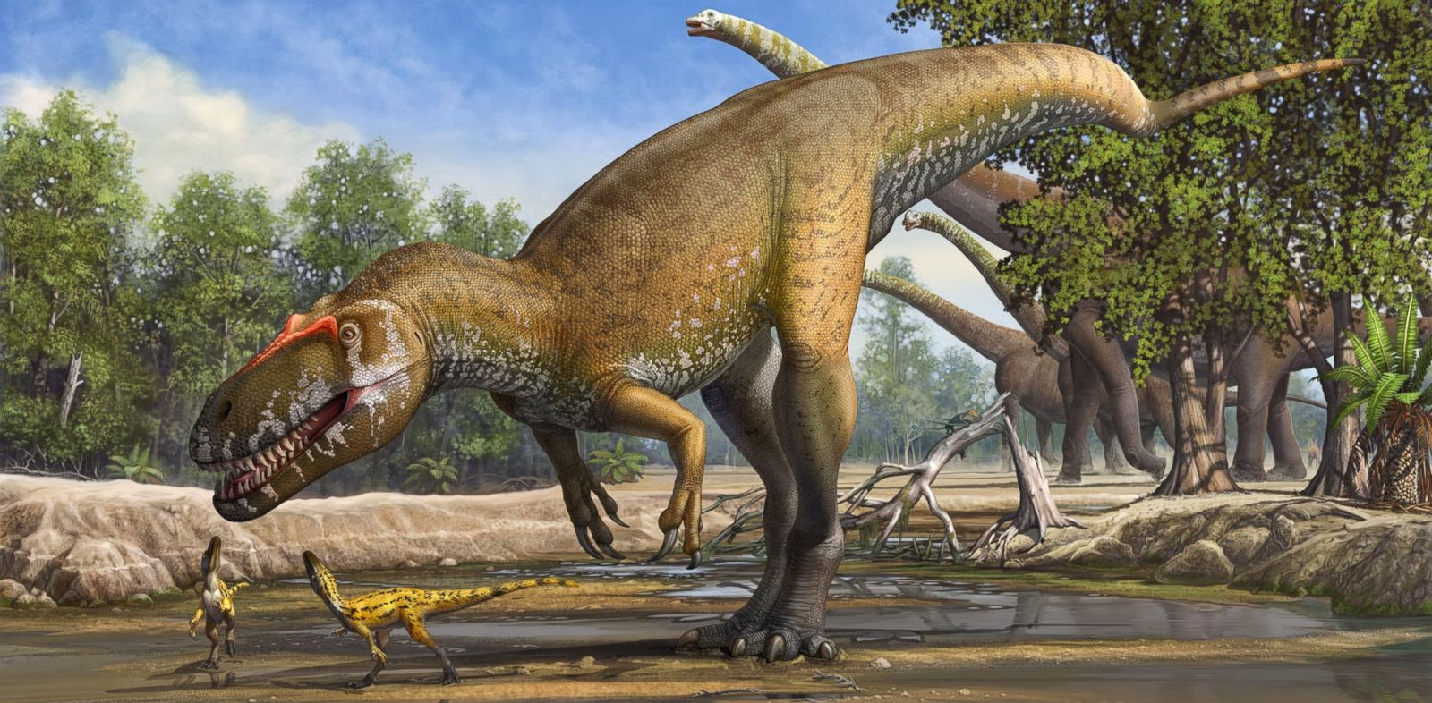 PHOTO: Torvosaurus gurneyi may have been the largest European predator in the late Jurassic.