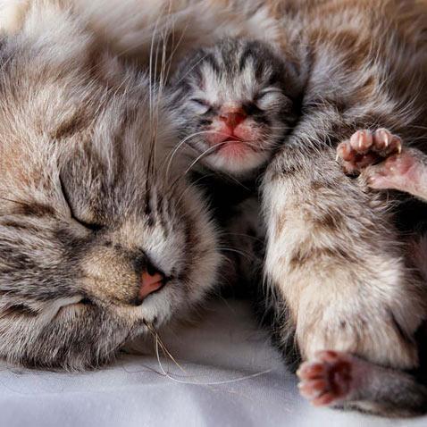 ht mothers love cat kitten 2 ll 120509 wblog A Mothers Love