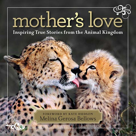 ht mothers love cover ll 120509 wblog A Mothers Love