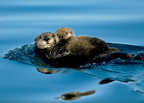 ht mothers love sea otter newborn ll 120509 wblog A Mothers Love