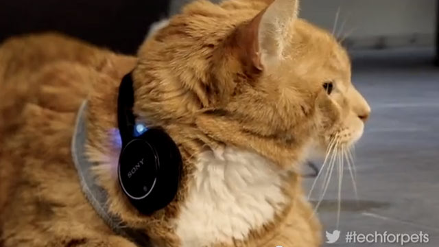 PHOTO: Sony's April Fools' Day prank includes headphones for cats.