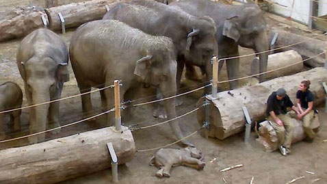 lv lola 1 dm 120123 wblog Elephant Herd Mourns Loss of Calf