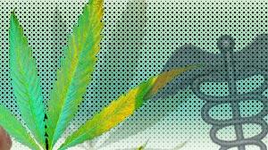 New medicinal marijuana iphone app