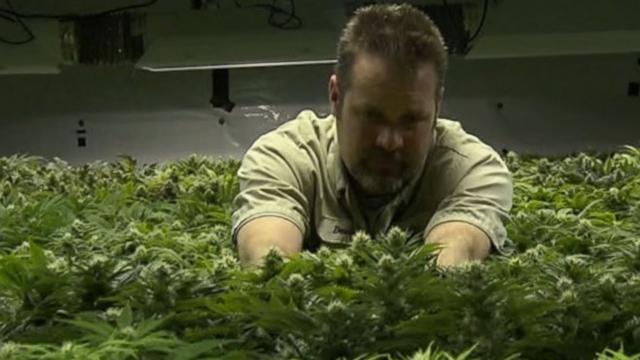 VIDEO: This Week: Marijuana in Colorado