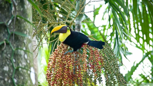 PHOTO: Reconnect with nature at Lapa Rios Ecolodge & Wildlife Reserve in Costa Rica.