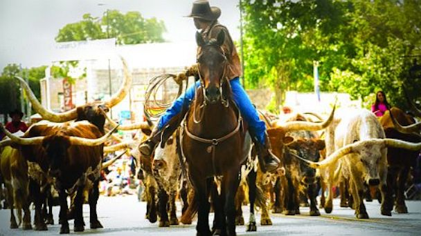 PHOTO: Cattle Drive, Celebrate Bandera.