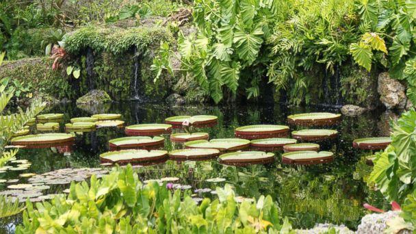 PHOTO: Fairchild Tropical Botanical Gardens, Coral Gables, Fla.