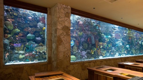 7 hotels with awe inspiring aquariums abc news for Fish hotel tank