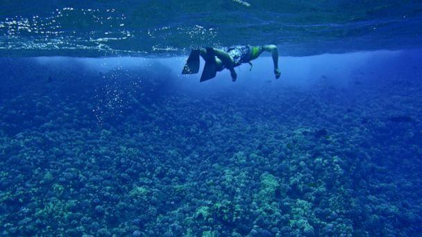 PHOTO: A snorkeler is seen in Maui, Hawaii.