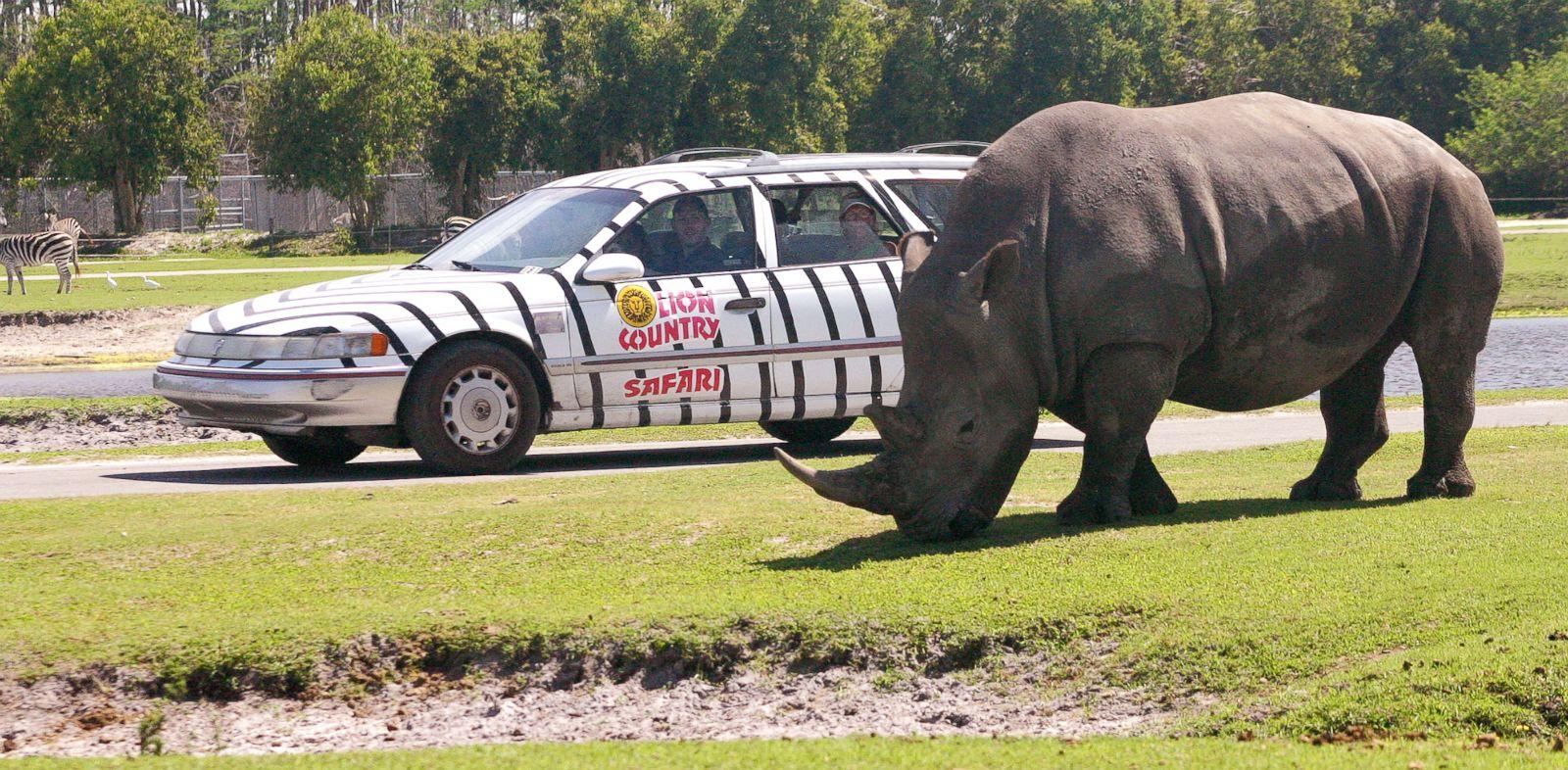 PHOTO: A rhinoceros is seen at Lion County Safari in Loxahatchee, Fla.