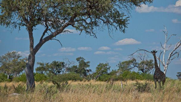 PHOTO: Selinda Canoe Trail, Botswana