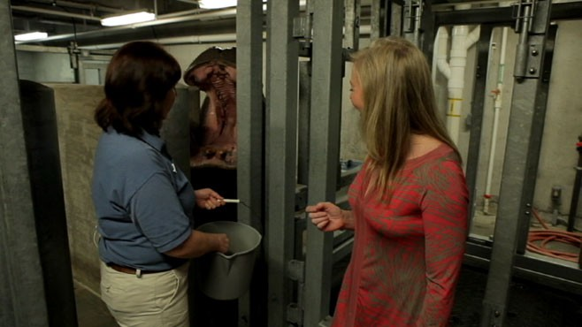 VIDEO: Feed dangerous wildlife and get an insiders tour.