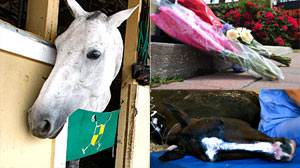 PHOTO Myseterious Horse Deaths Unknown; Vets Say Toxic Substance Likely Killed Horses