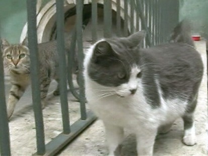 VIDEO: 60 cats live with art at The State Hermitage in St. Petersburg, Russia.